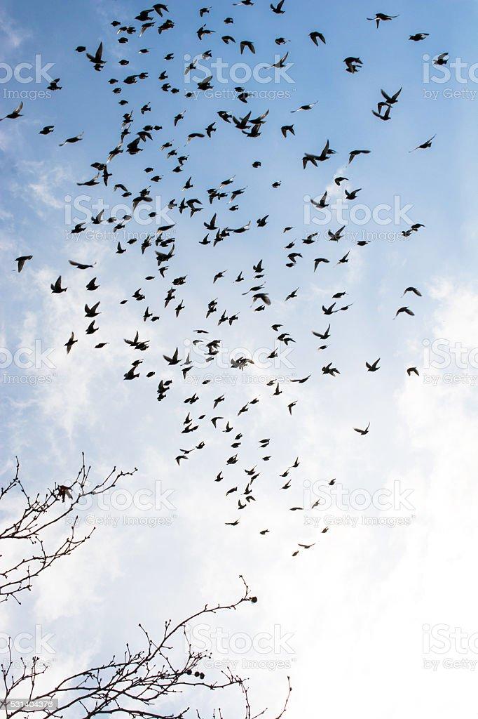Sky full of birds stock photo