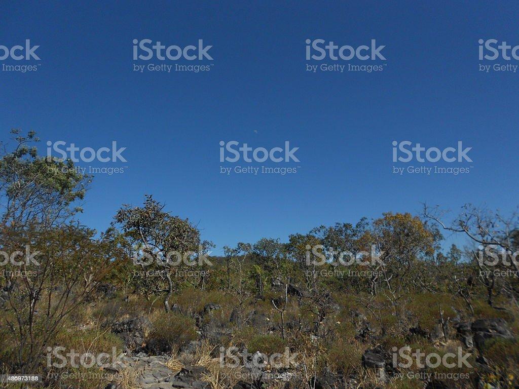 Sky, moon and the Brazilian Cerrado stock photo