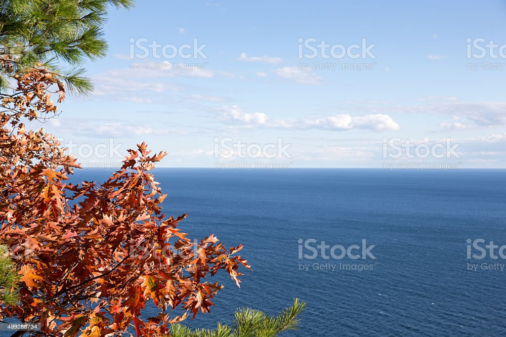 Sky Over Water Horizon Framed by Trees stock photo