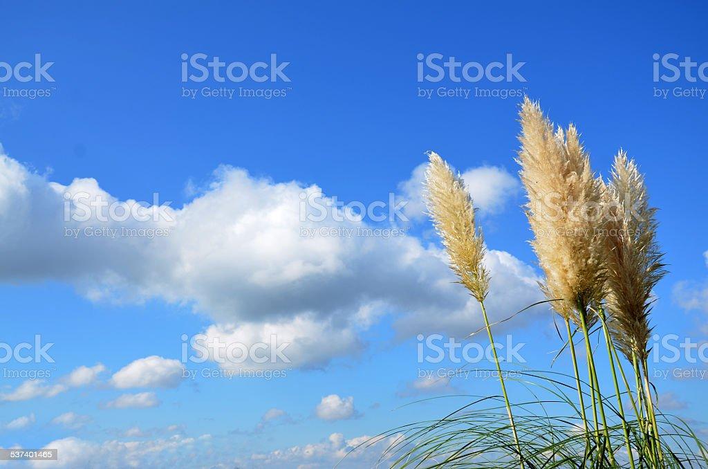 Sky foto de stock libre de derechos