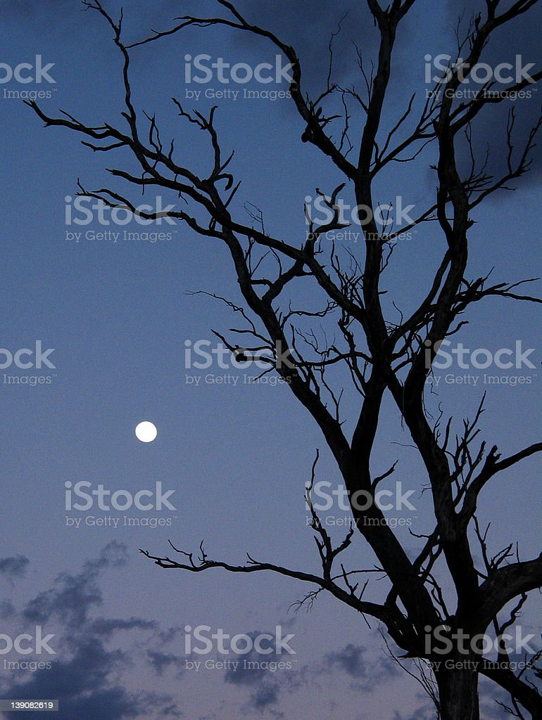 sky - tree silhouetted against dawn sky stock photo