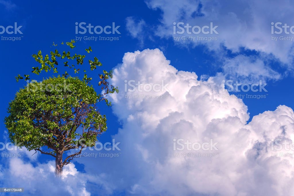 Sky tree with green butterflies and white clouds stock photo
