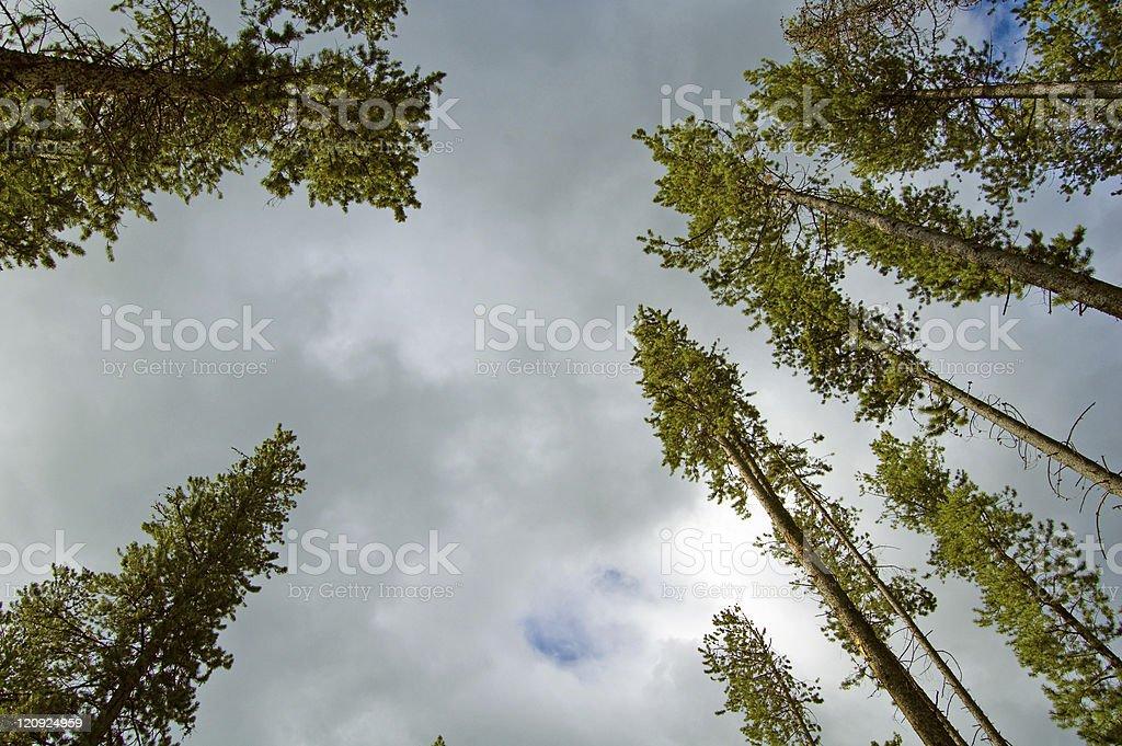 Sky, Trees, Copy Space stock photo
