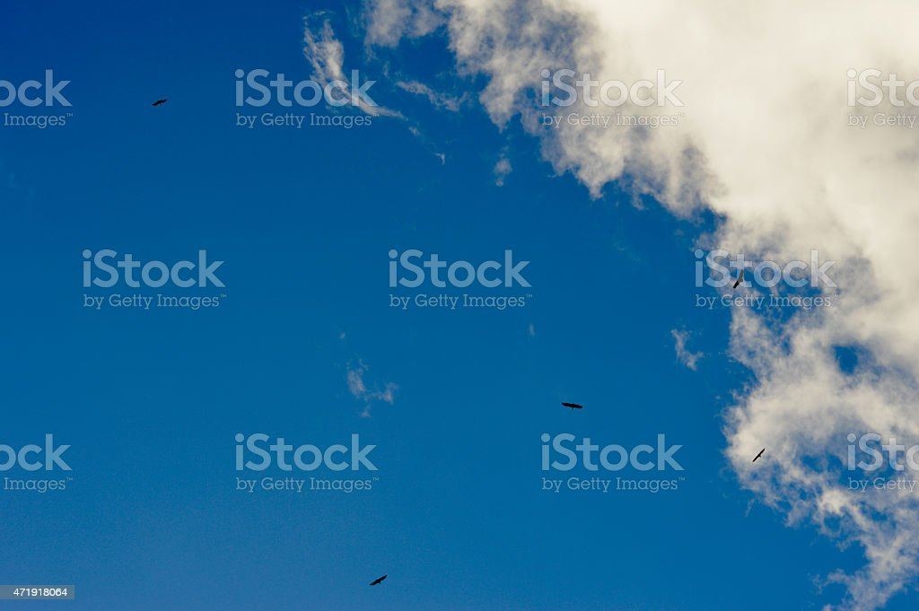 sky with eagles stock photo