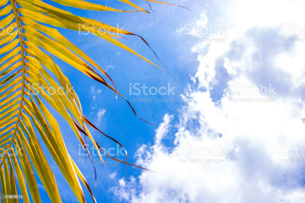 sky with palm tree leaves stock photo