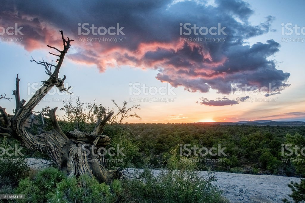 Skyscape Of Sunset Clouds Behind A Gnarled Old Stump stock photo