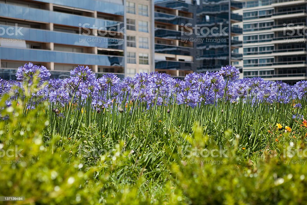 skyscraper and flowers royalty-free stock photo