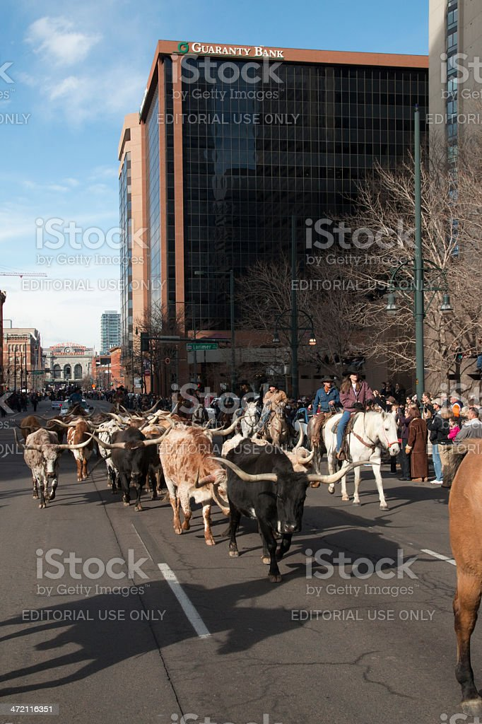 Skyscrapers and longhorn cattle downtown Denver Colorado vertical stock photo