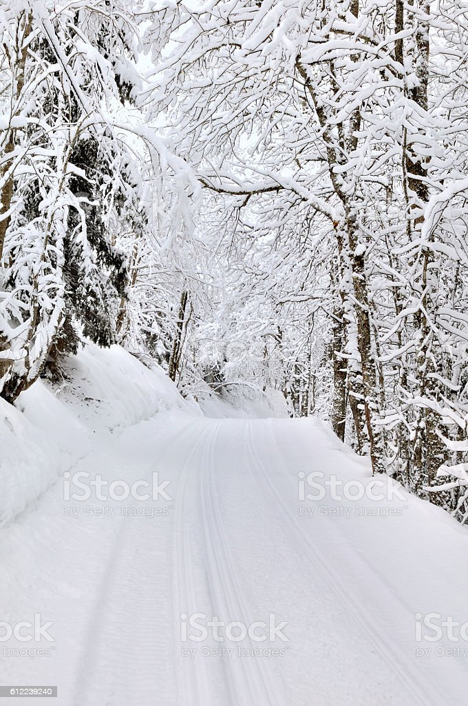 slade crossing forest in winter stock photo