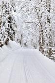 slade crossing forest in winter
