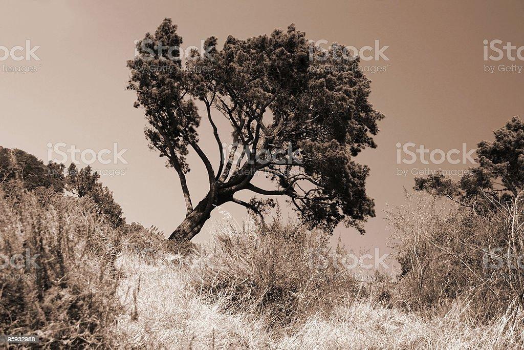 Slanted Tree stock photo