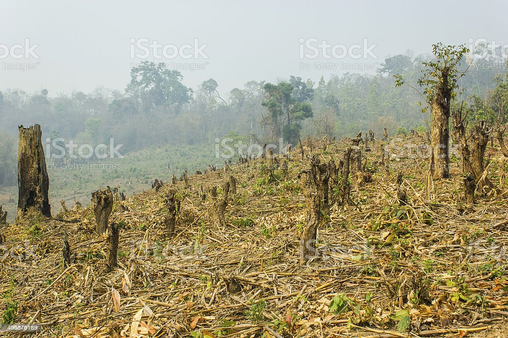 Slash and burn cultivation stock photo