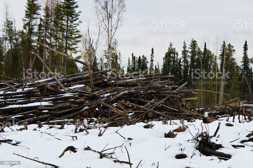 Slash piles left after clear cutting stock photo