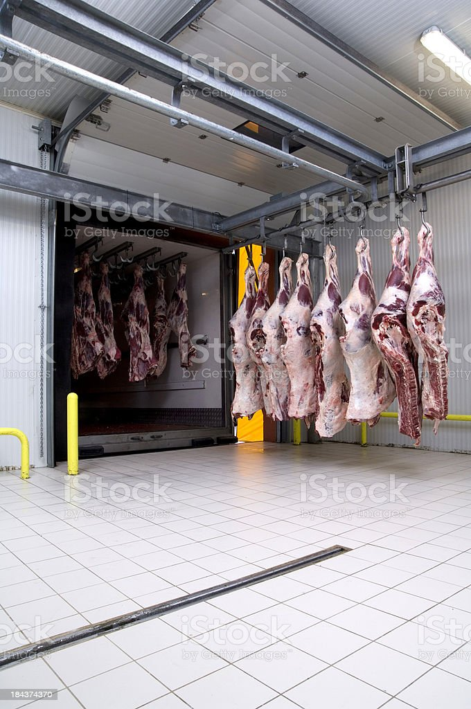 slaughter house royalty-free stock photo