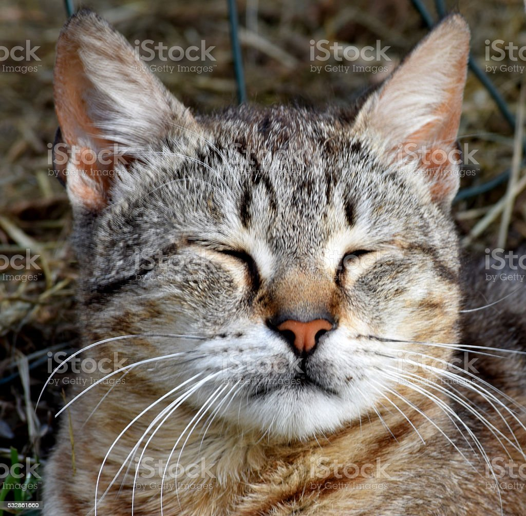 Sleaping cat stock photo