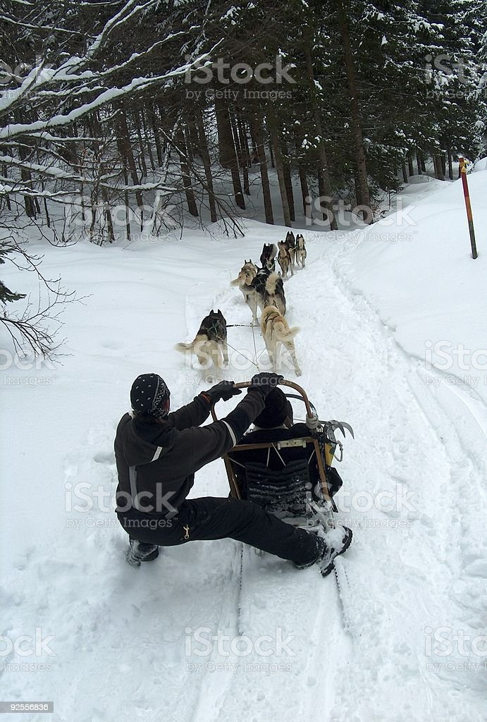 Sled and Snow Dogs stock photo