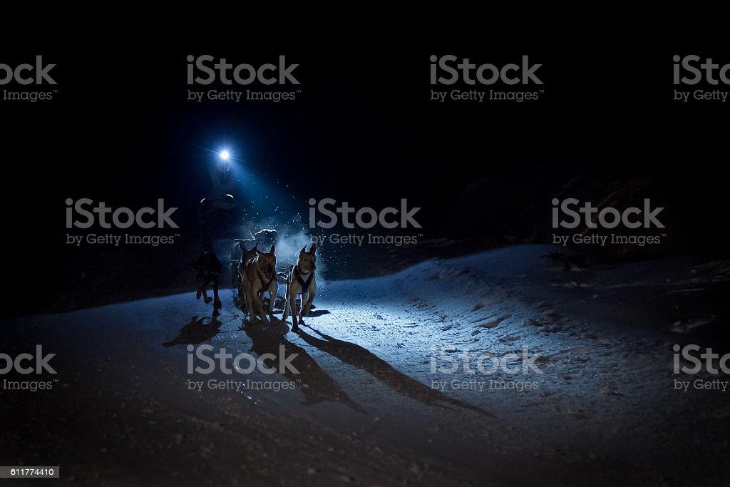 Sled Dog at night stock photo