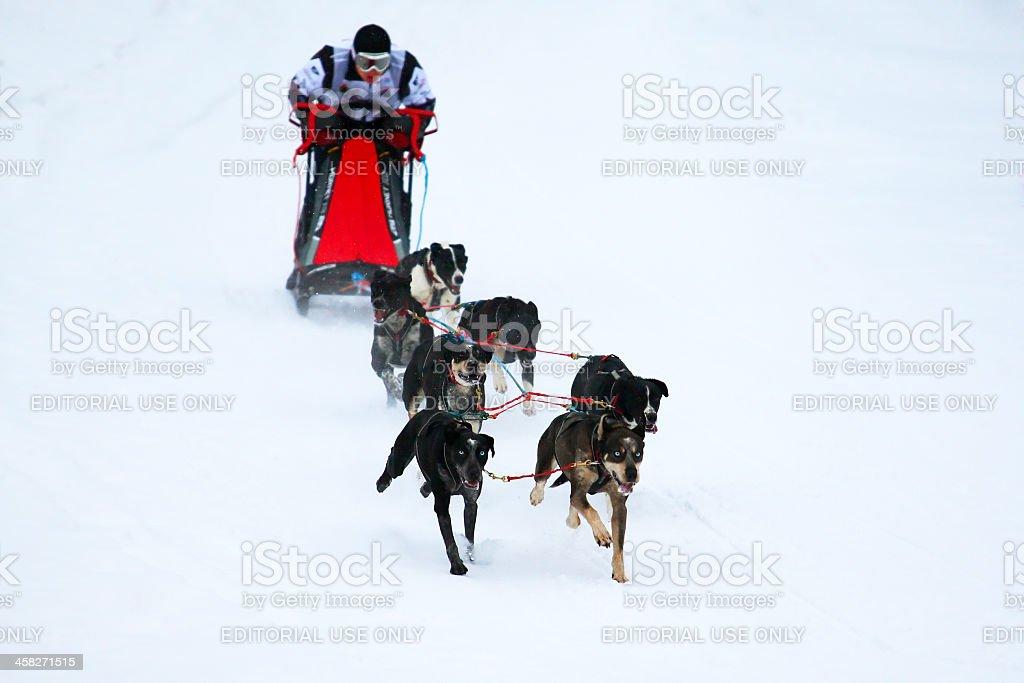 Sled dog race. royalty-free stock photo