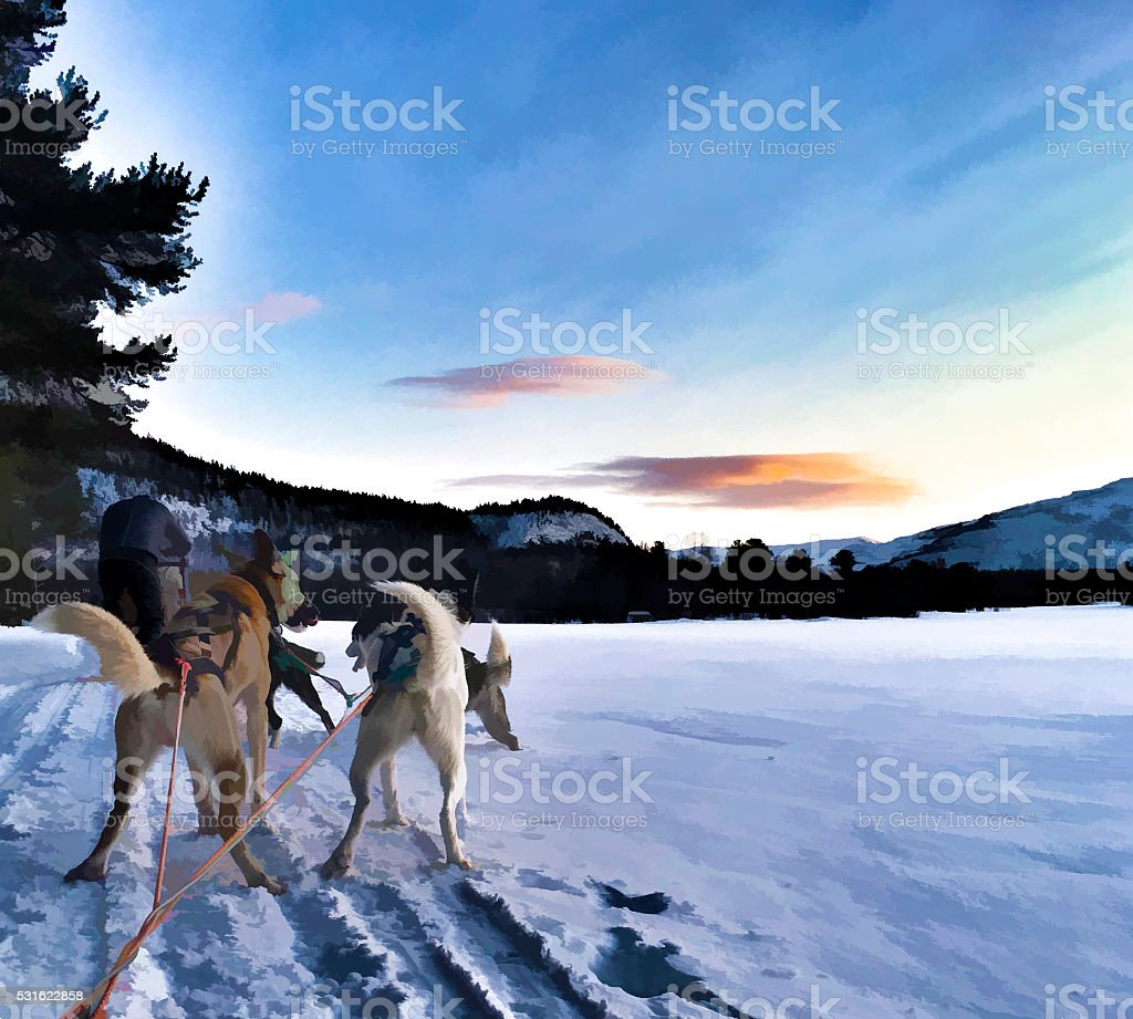 sled dog team running in winter field stock photo