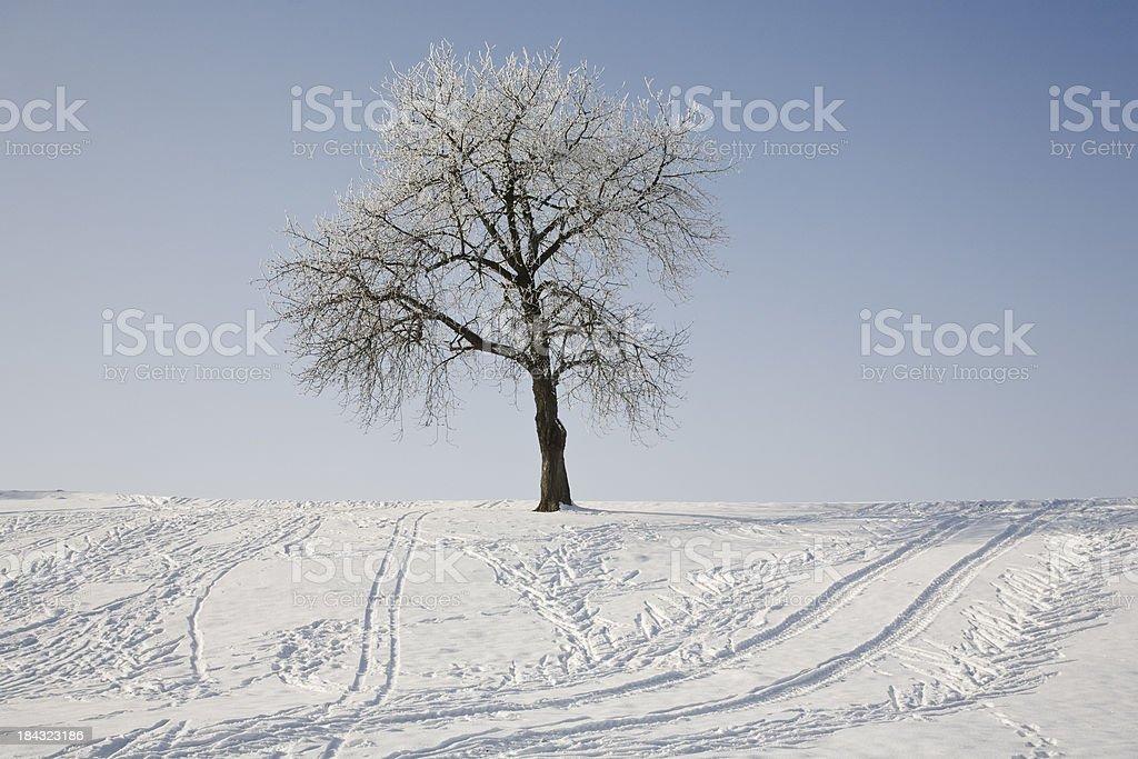 Sledge slope royalty-free stock photo