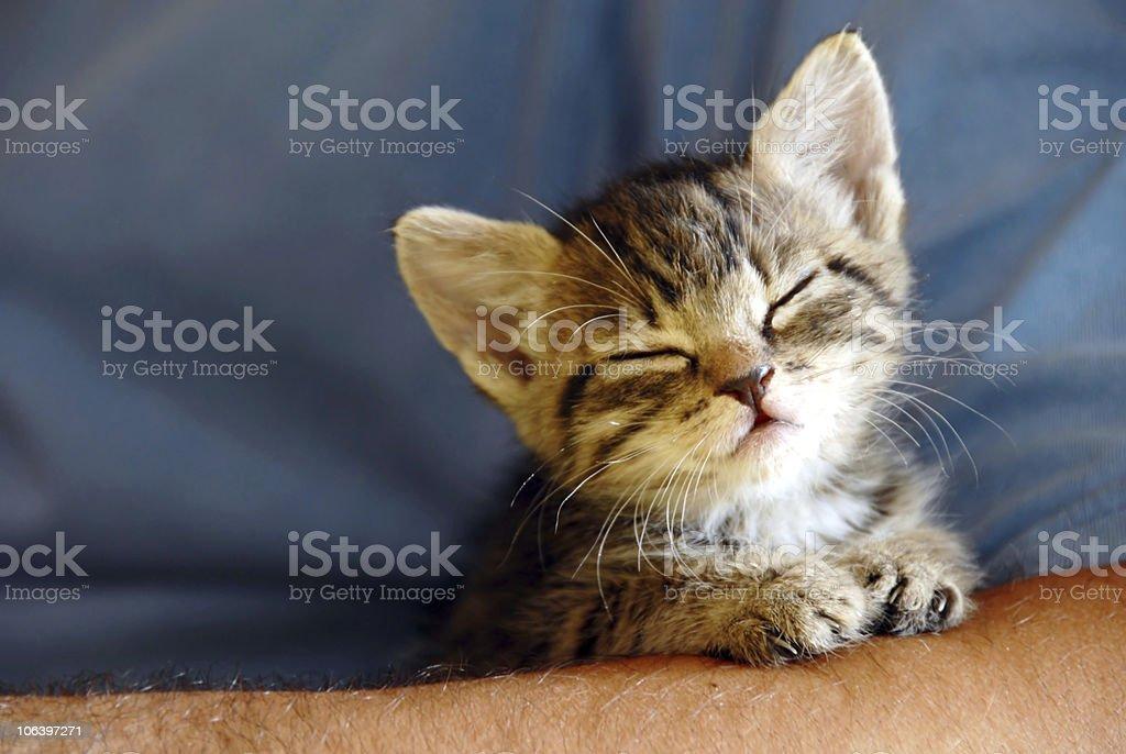 Sleeping baby cat stock photo