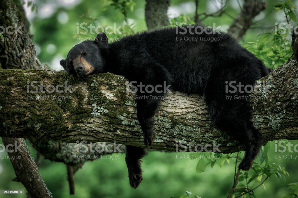 Sleeping Bear stock photo