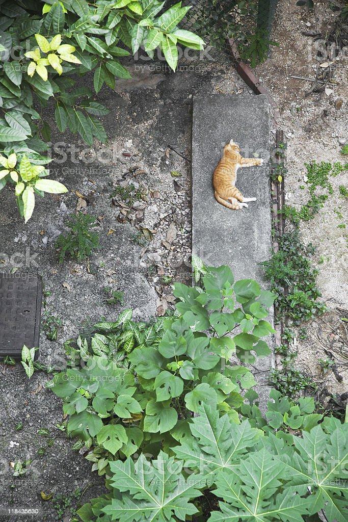 Dormitorio Cat en el jardín foto de stock libre de derechos