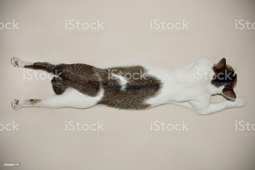 sleeping cat on the floor stock photo