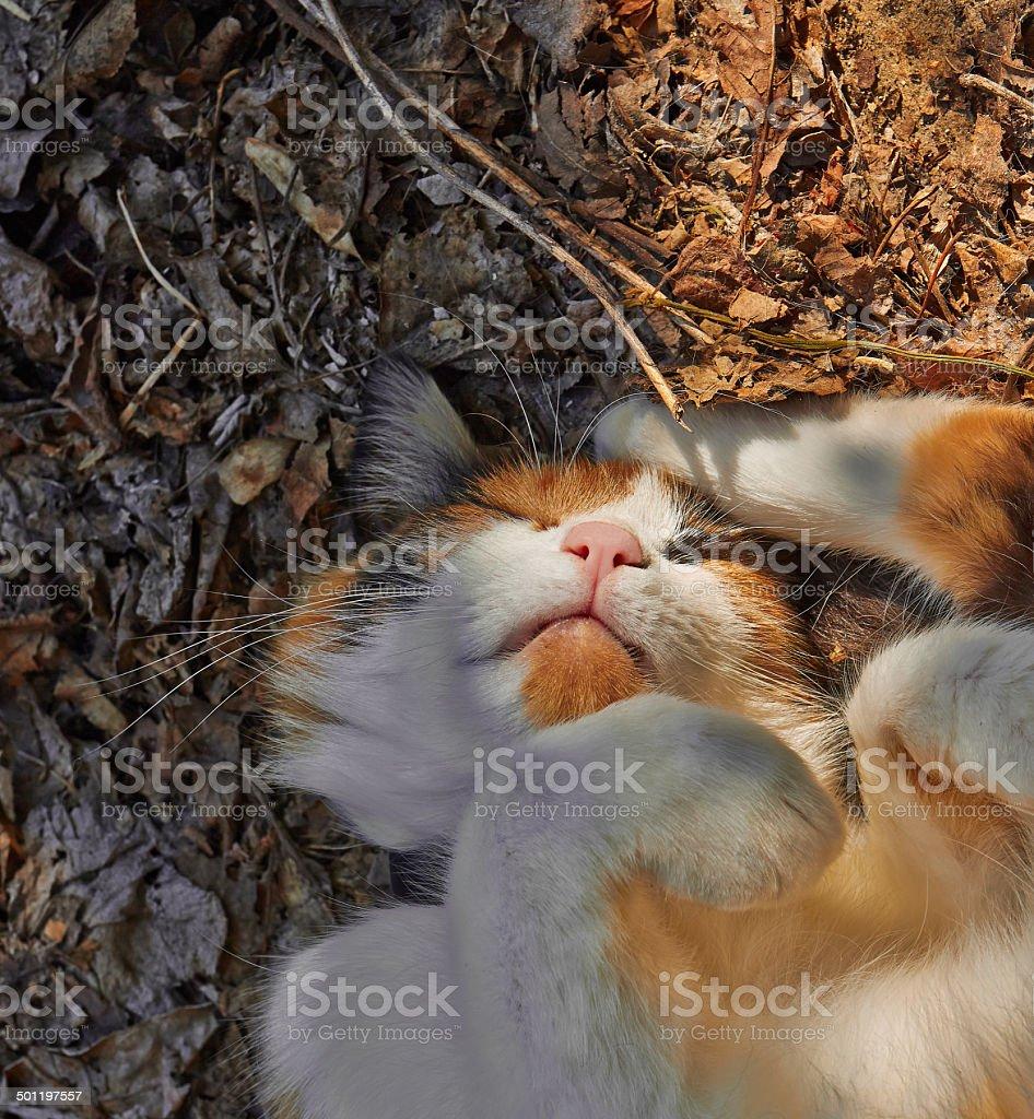 sleeping cat royalty-free stock photo