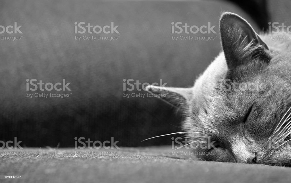 Sleeping Cat Positioned Off-Center stock photo