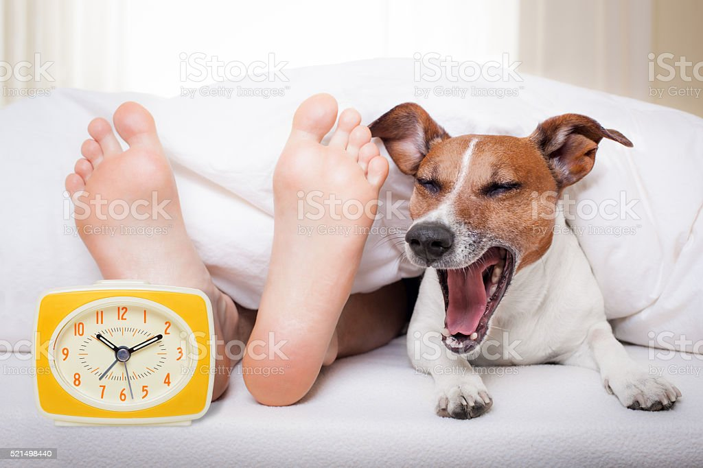 sleeping dog and owner stock photo
