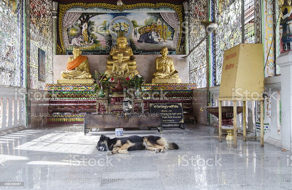 Sleeping dog at  Buddhist Temple, Thailand royalty-free stock photo