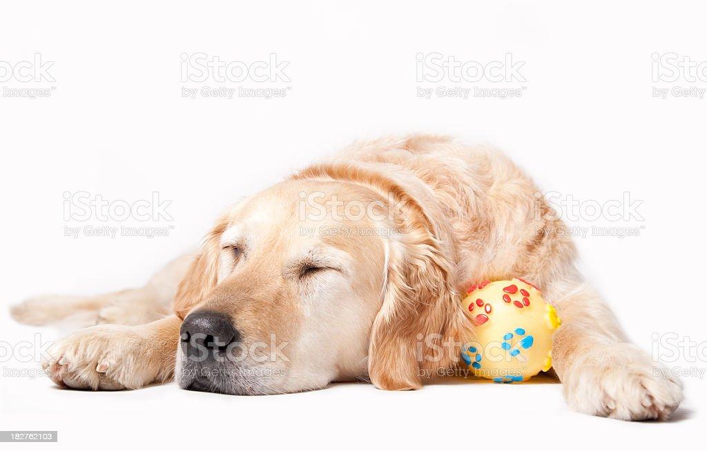 Sleeping Dog royalty-free stock photo
