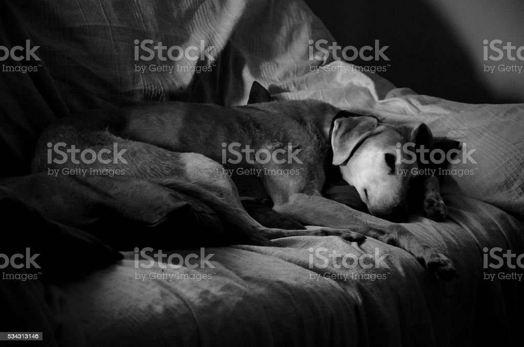 sleeping dog stock photo