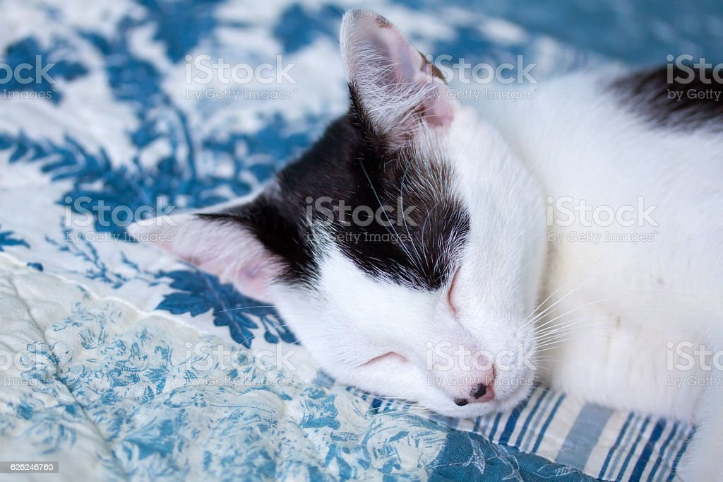 Sleeping domestic cat stock photo