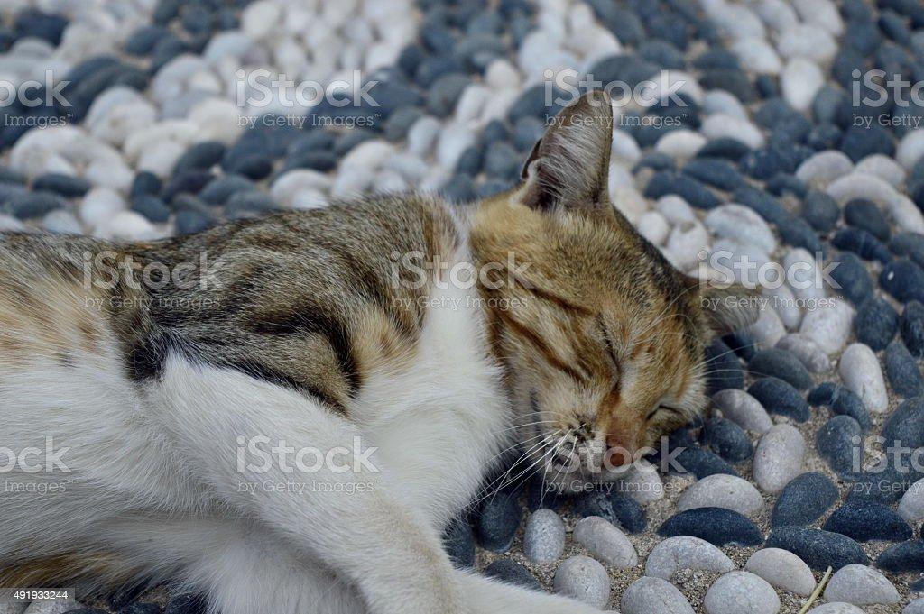 Sleeping greek kitten stock photo
