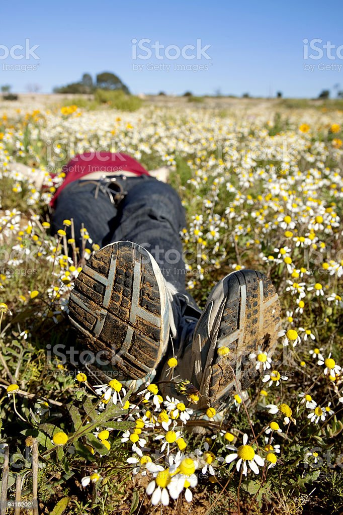 Sleeping in the daisies stock photo