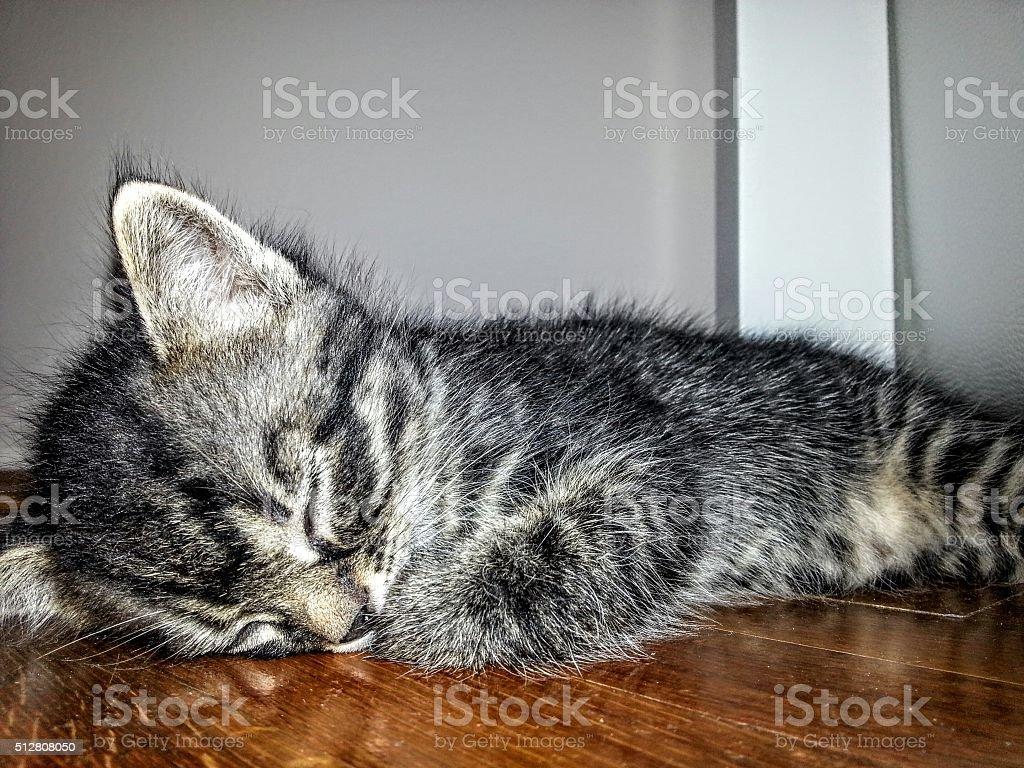 Sleeping kitten royalty-free stock photo