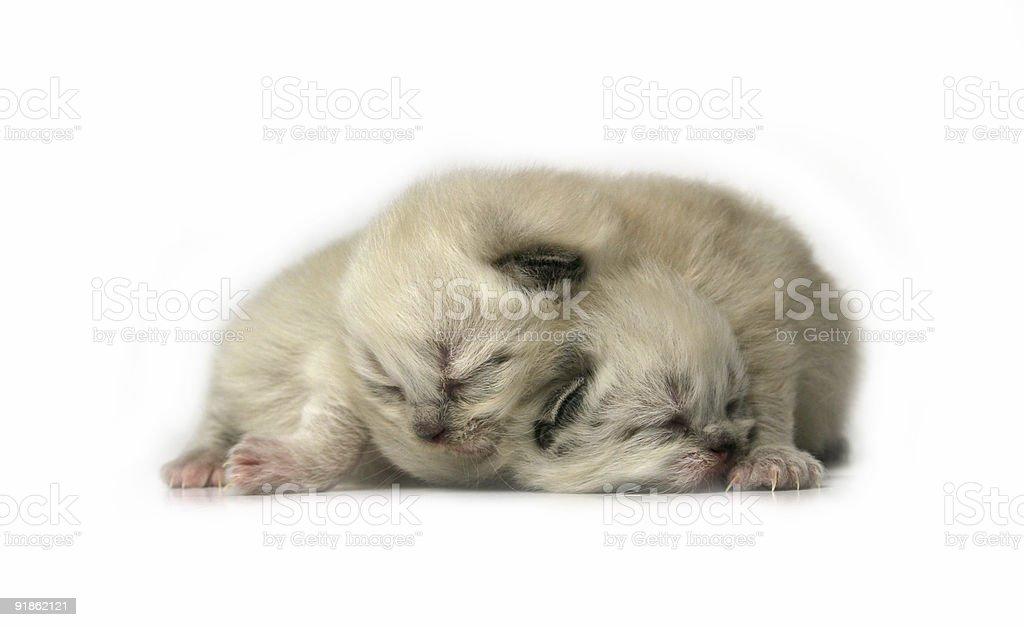 Sleeping Kittens royalty-free stock photo