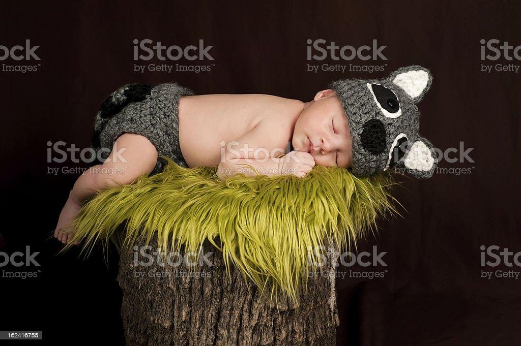 Sleeping Newborn Baby Boy Wearing a Raccoon Costume royalty-free stock photo