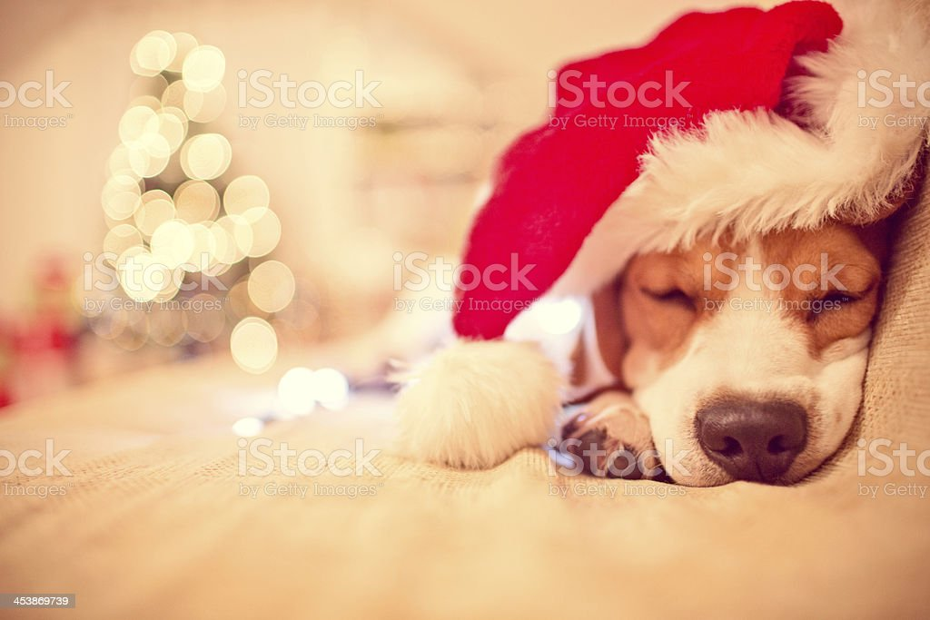Sleeping on a New Year's Eve stock photo
