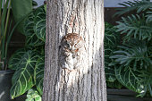 Sleeping owl in  a hole of tree trunk(1)