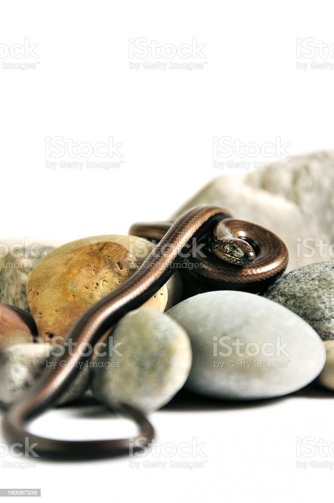 Sleeping snake on the rocks stock photo