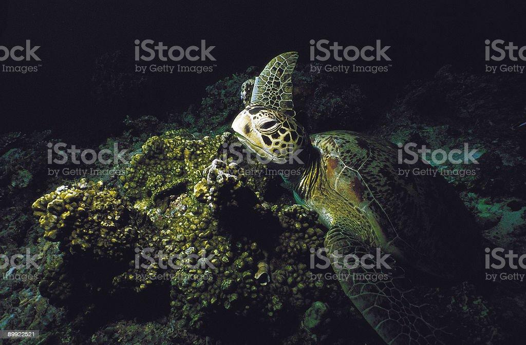 Chambre Turtle photo libre de droits