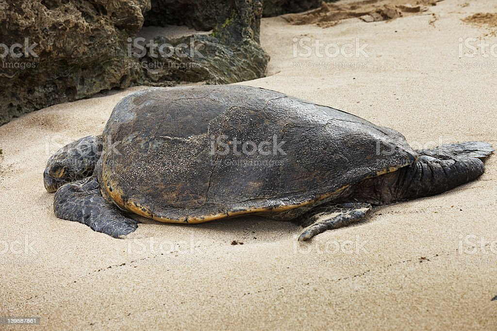 Sleeples on a beach stock photo