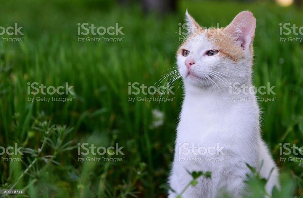 Photo of a baby cat among green grass. Cat looks like sleepy. Photo...