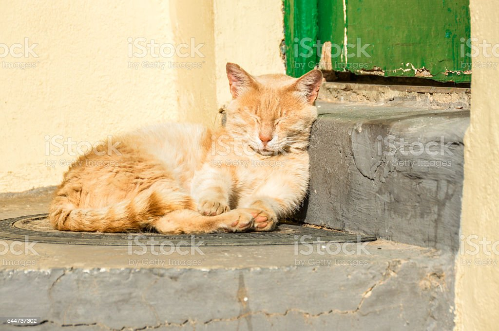 Sleepy cat in Greece stock photo