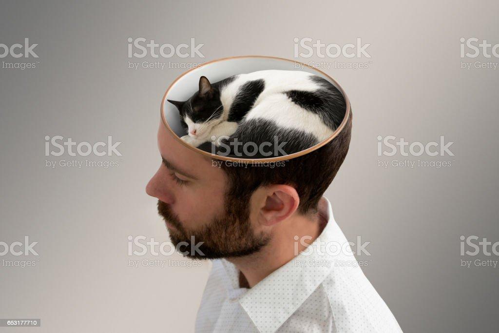 Sleepy cat inside a man's head. stock photo