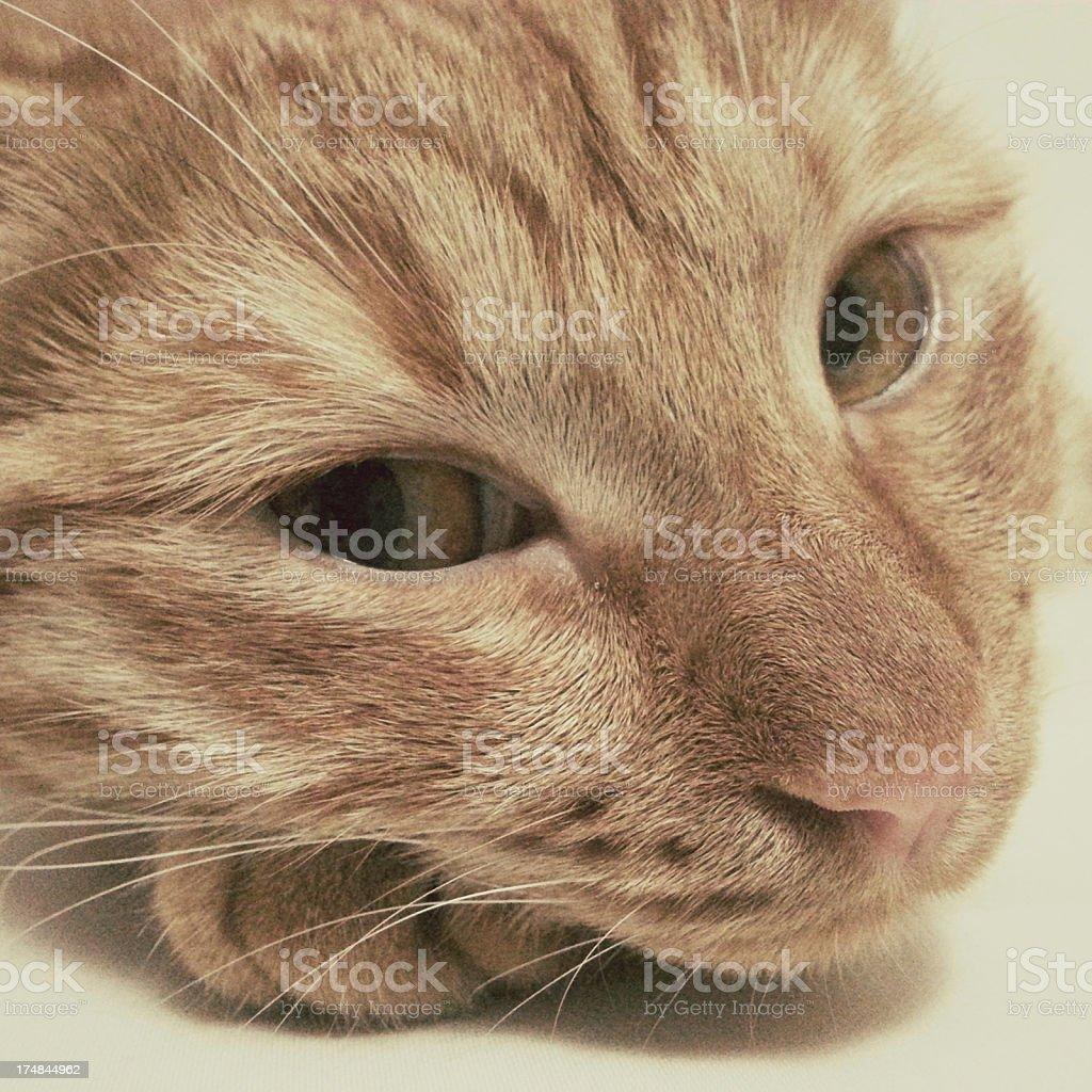 Sleepy cat royalty-free stock photo