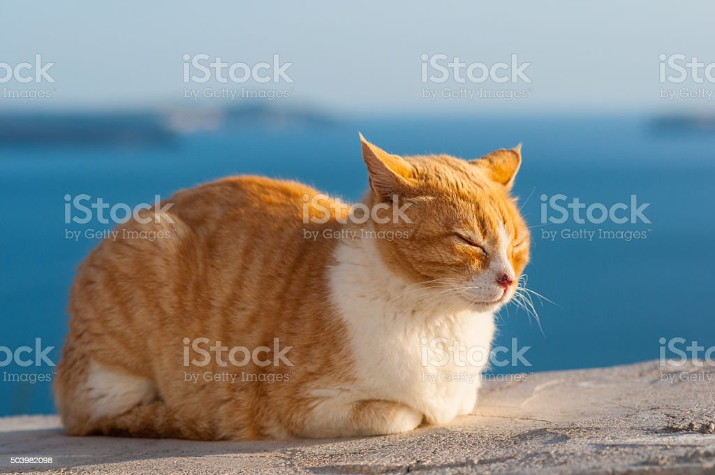 Sleepy cat stock photo